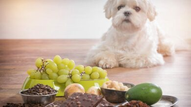 Alimentos que no puede comer un perro