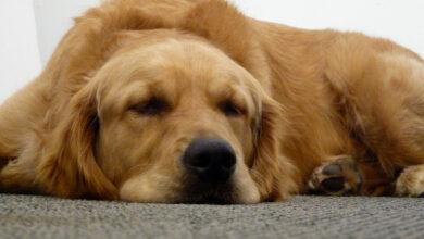 Epilepsia en Perros Todo lo que debes saber