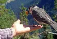 Los mejores nombres para pájaros