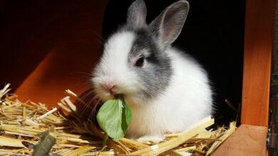Alimentación de los conejos domésticos