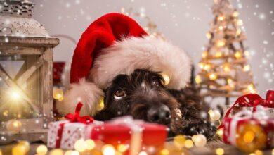 Regalar mascotas en Navidad