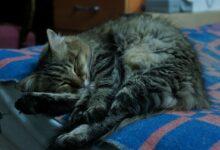 ¿Por qué los gatos duermen tanto?