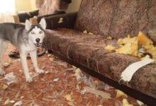 Por qué los perros muerden todo